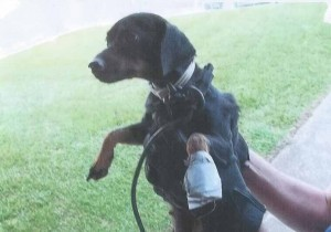 This dog was found Thursday night, his mouth and paws bound with duct tape, tied up with an electrical cord in the old Ebenezer schoolhouse.