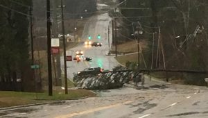 A tree fell near George Wallace Drive, blocking all lanes of traffic.